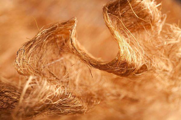 Sợi Cellulose cấu tạo lên gỗ